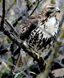 Technoparc-Oiseaux-wildlife-graham-Eady-eddie-1