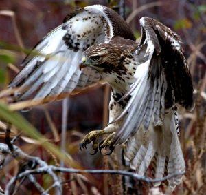 Technoparc-Oiseaux-wildlife-graham-Eady-eddie-2