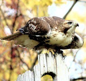 Technoparc-Oiseaux-wildlife-graham-Eady-eddie-3
