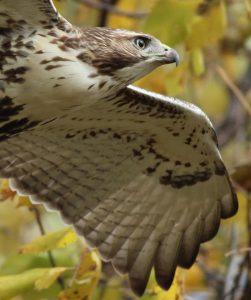 Technoparc-Oiseaux-wildlife-graham-Eady-eddie-4