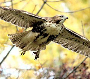 Technoparc-Oiseaux-wildlife-graham-Eady-eddie-5