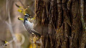 Technoparc-Oiseaux-wildlife-2-Jonathan-Poissant