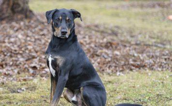 Animatch-pet-adoption-dog-George
