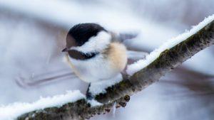 bird snow winter nature